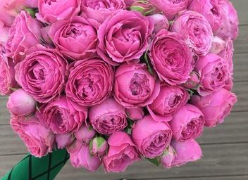 Комнатные цветы по знаку зодиака рак, заказ цветов на дом в кирове